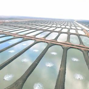 fish-farms-4jpg