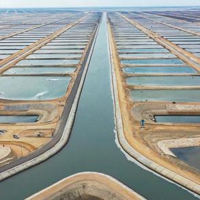 fish-farms-3jpg