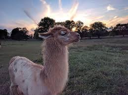 Llama Farm Digital Retreat