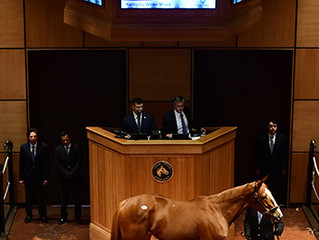 Cheekaboo- Sales Topper at Fasig-Tipton February