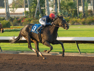 Grade 2 Winner Majestic Heat Retires