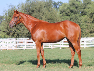 Auerbach Bred Yearlings Light Up The Sales Board at Barretts August