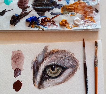 Estudio ojo de lince