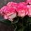 Thumbnail: Роза Джумилия