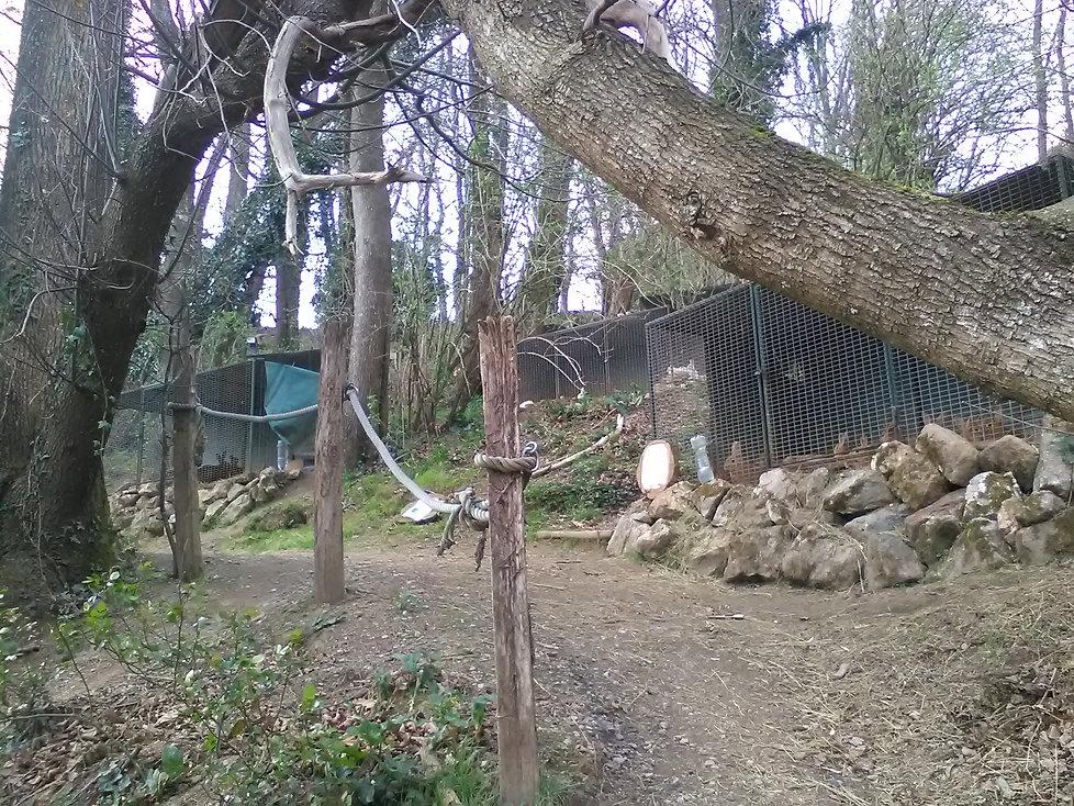 la foret des lapins offre la découverte d'une multitude d'essences forestière et de lapins et cochons d'Inde à itxassou au pays basque  s'ouvre au tourisme