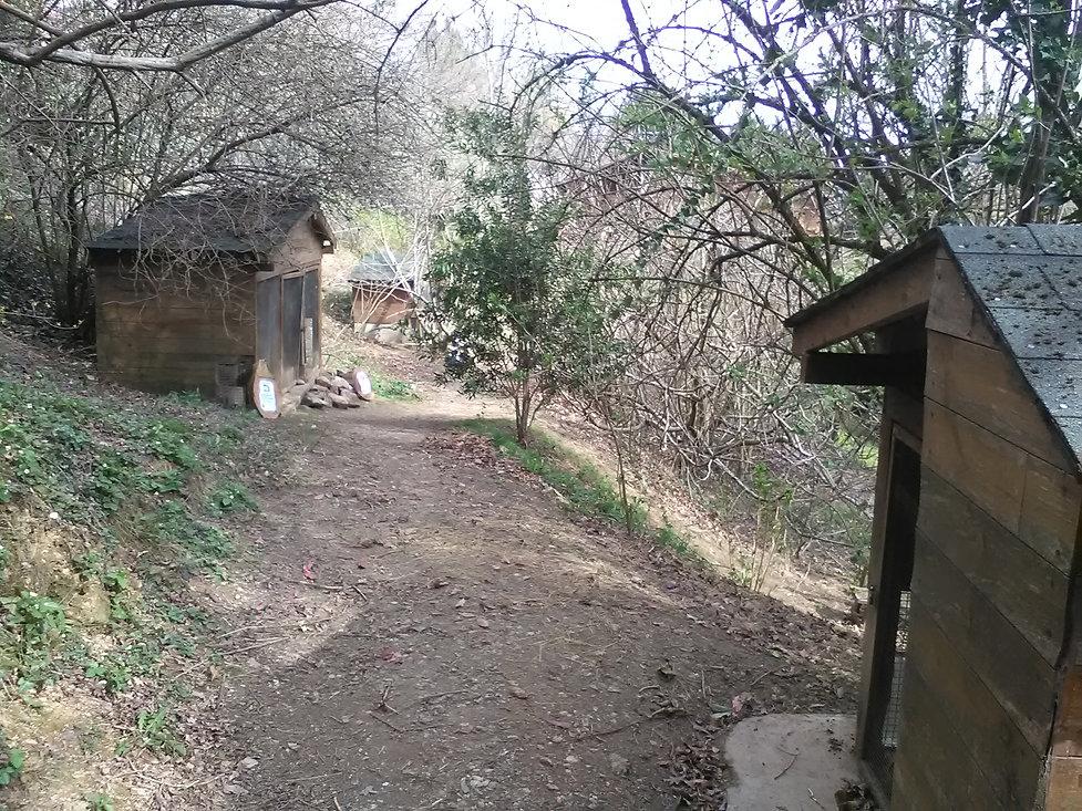 le circuit de la foret des lapins sillonne sous les arbres au milieu des lapins et cobayes s'ouvre au tourisme à itxassou au pays basque