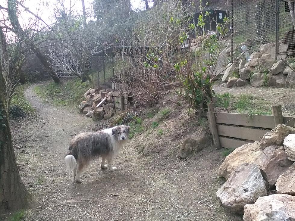circuit de la foret des lapins et cochons d'Inde à itxassou au pays basque s'ouvre au tourisme