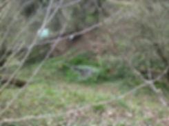 découvrez les maisonnettes discimulées sur le circuit de la foret des lapins et cochons d'Inde à itxassou au pays basque s'ouvre au tourisme