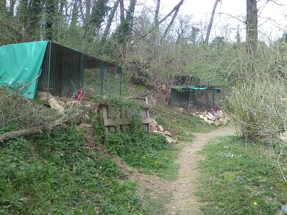 à l'ombre de la foret des lapins et cochons d'Inde à itxassou au pays basque s'ouvre au tourisme