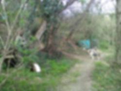 la foret des lapins et cobayes à itxassou au pays basque  s'ouvre au tourisme