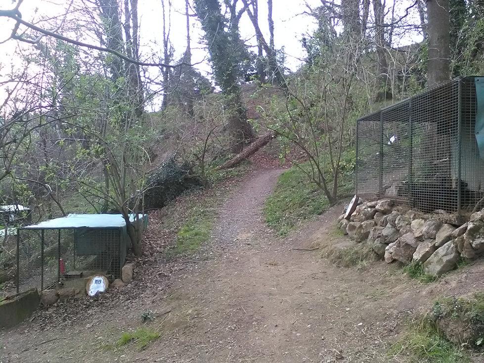 sentier empierré de foret pour découvrir les lapins et les cochons d'indes à itxassou au pays basque