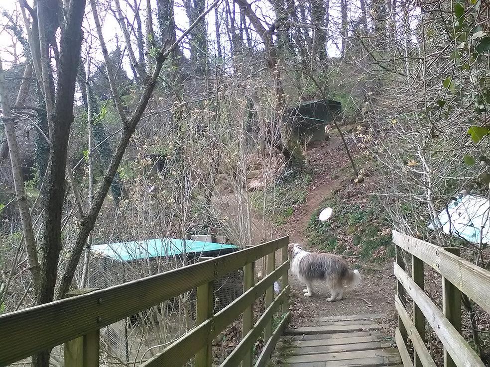 élevage de la foret des lapins et cobayes à itxassou au pays basque s'ouvre au tourisme