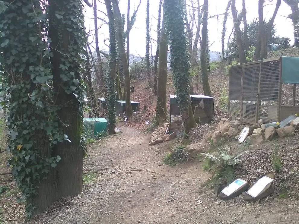 l'elevage de la foret des lapins à itxassou au pays basque s'ouvre au tourisme  s'ouvre au tourisme