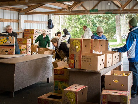 Volunteer for Concern for Neighbors Food Bank