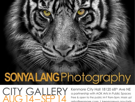 AOK presents: Sonya Lang black and white into color