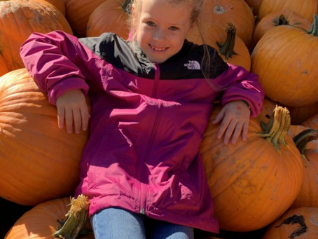Looking for family fun? Try fall farm festivals
