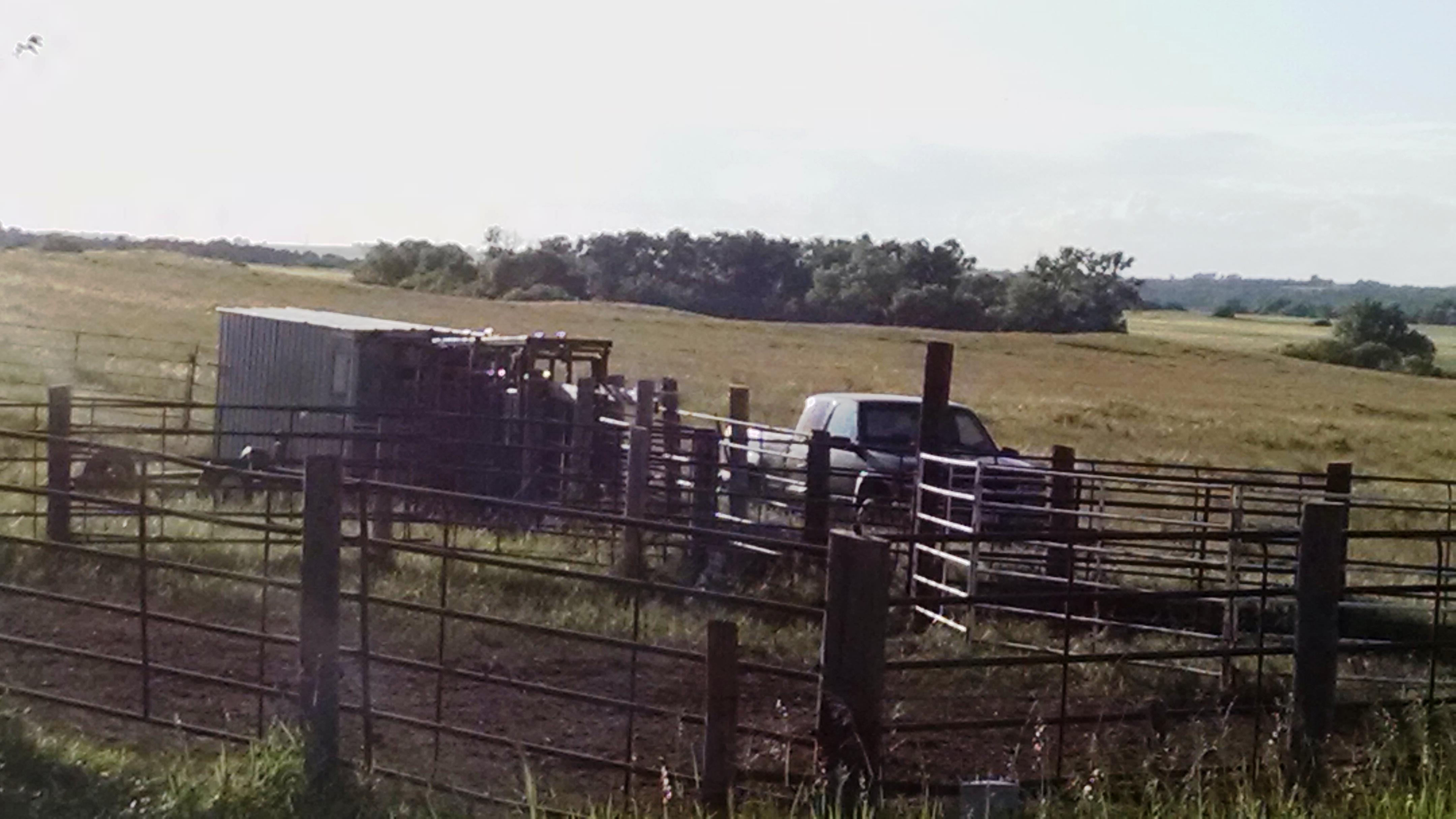 A.I. pasture
