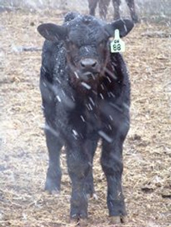 Baby in a snowstorm