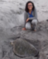 SOC Sea Turtle Nesting Research - High School Science (STEM) Field Marine Biology