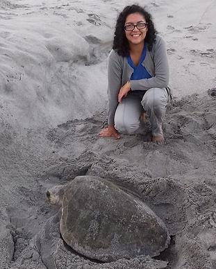 SOC Sea Turtle Nesting Research - High School Science (STEM) Field Marine Biology