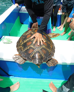 SOC IndoPacific Sea Turtle - High School Marine Biology Research, Equipo Tora Carey, Costa Rica