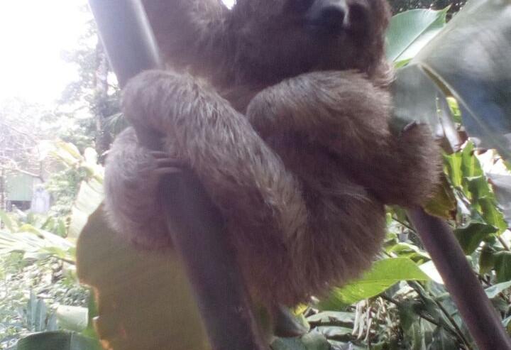 Sloth - SOC - Costa Rica