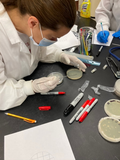 Teacher Training March 25-28, 2021 (MN): Insect-Microbiome Bioprospecting