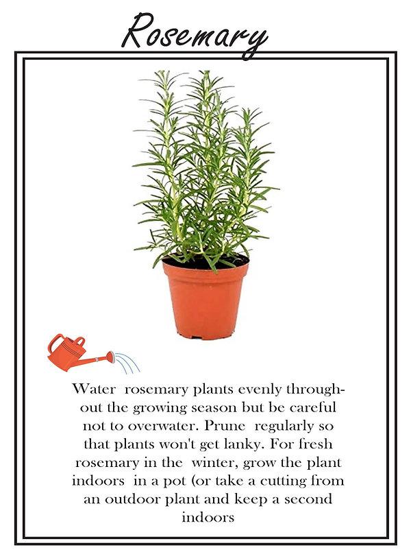 Rosemary copy.jpg