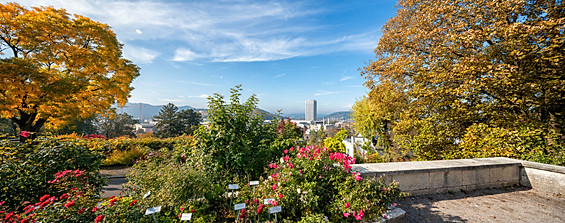 Winterthur Rosengarten Heiligberg