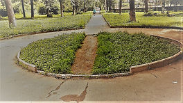 desire path 1.jpg