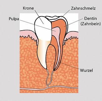 parodontolgie18.jpg