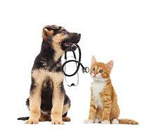 assicurazione-cane-assicurazione-gatto-a