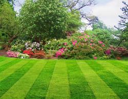 saaj garden photo (21).jpg