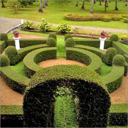 saaj garden photo (19).jpg