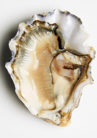 oyster, 2020.