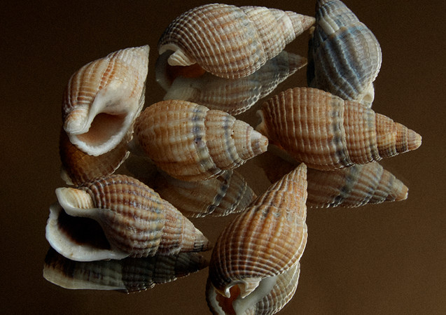 seashells, 2021.