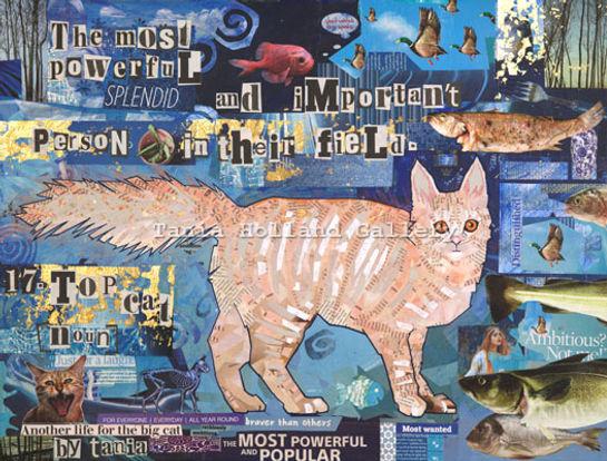17. Top Cat Web.jpg