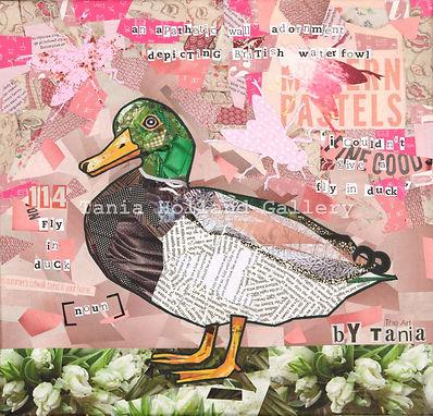 114. Fly in Duck1.jpg
