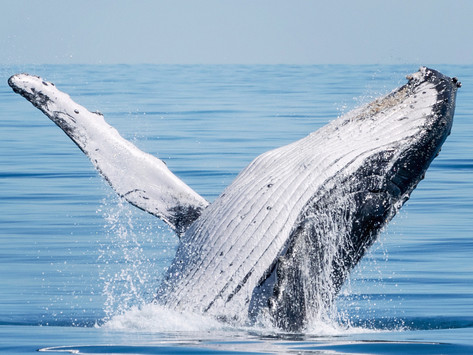 So you want to know how to take photos of whales?