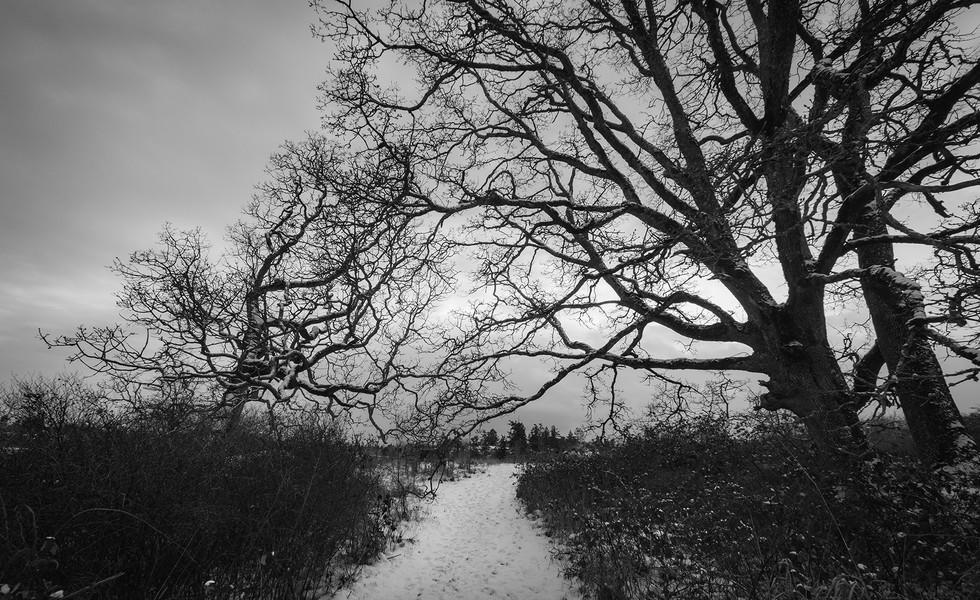 Pathway In Winter