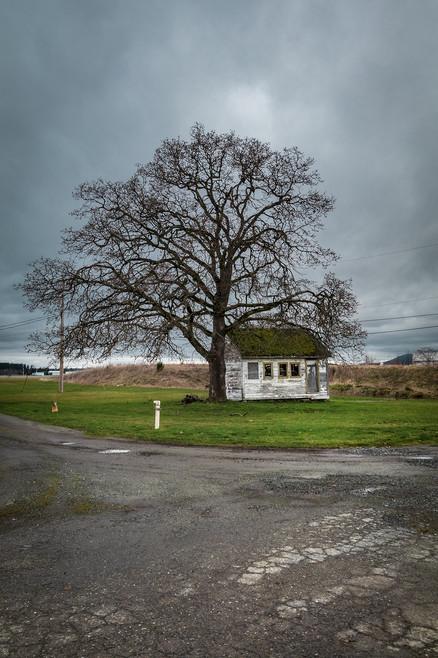 Big Tree Little House