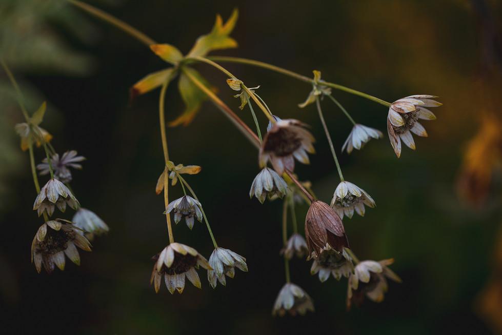 Rustic Flowers2