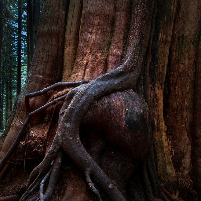 Avatar Tree