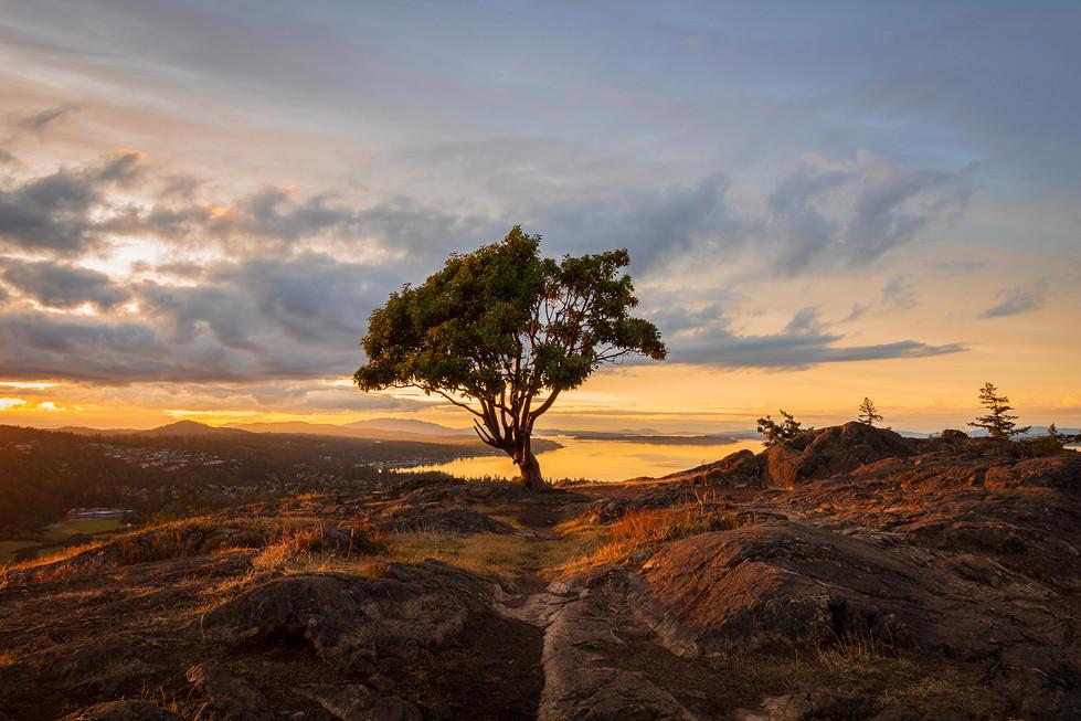 Lone Tree Mount Doug