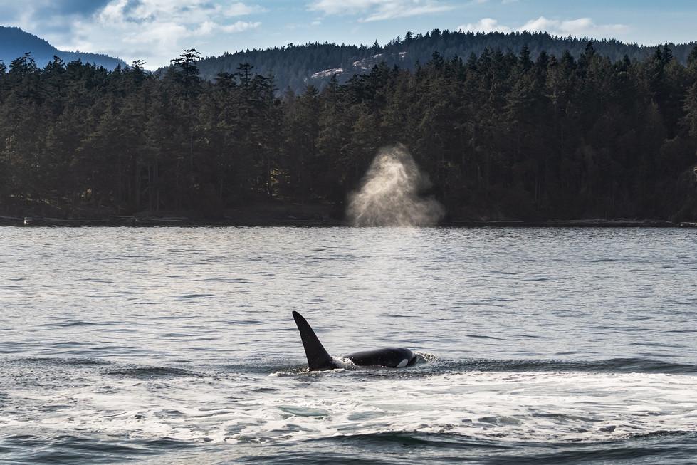 Orca Spray