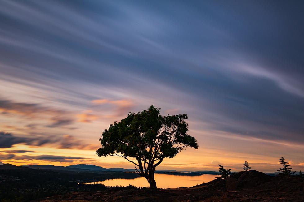 Lone Tee Sunset