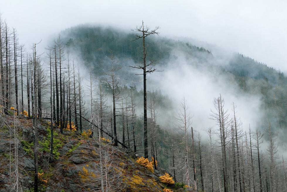 Valley Mist 2