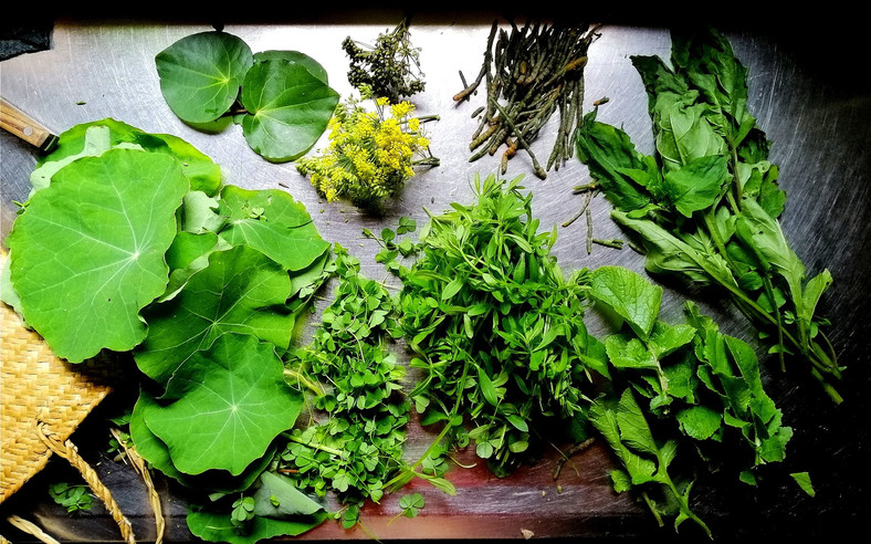 Edible Weeds Pesto Recipe, Identification and Health Benefits