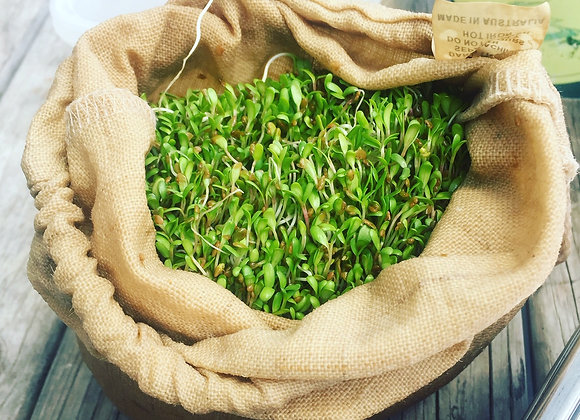 Sprouts Workshop | Sunday 6th June 3-5pm