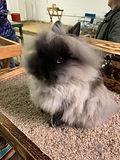 Bunny 3.jpg